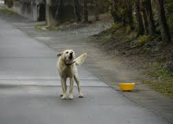 animales_abandonados